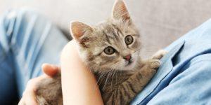 Kucing Kamu Jamuran, Jangan Panik Ini Cara Membasminya